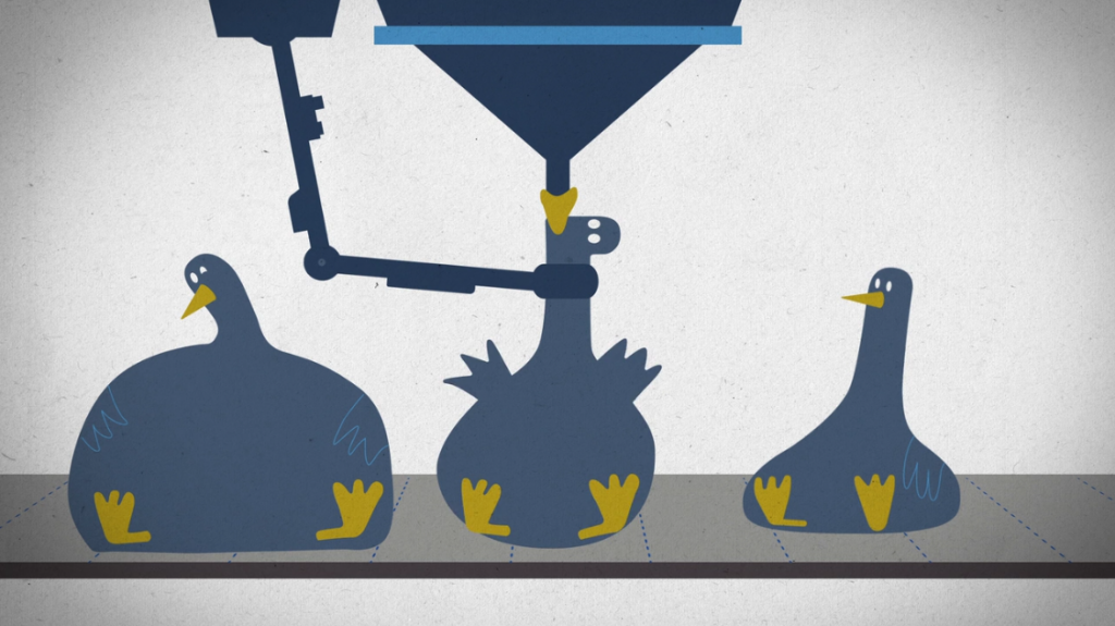 A screenshot from the Sugar Coated documentary showing ducks being force fed to make foie gras.